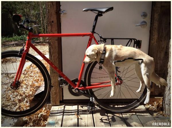 fairdale fahrrad dog rack abh ngen mit herrchen f rderland. Black Bedroom Furniture Sets. Home Design Ideas