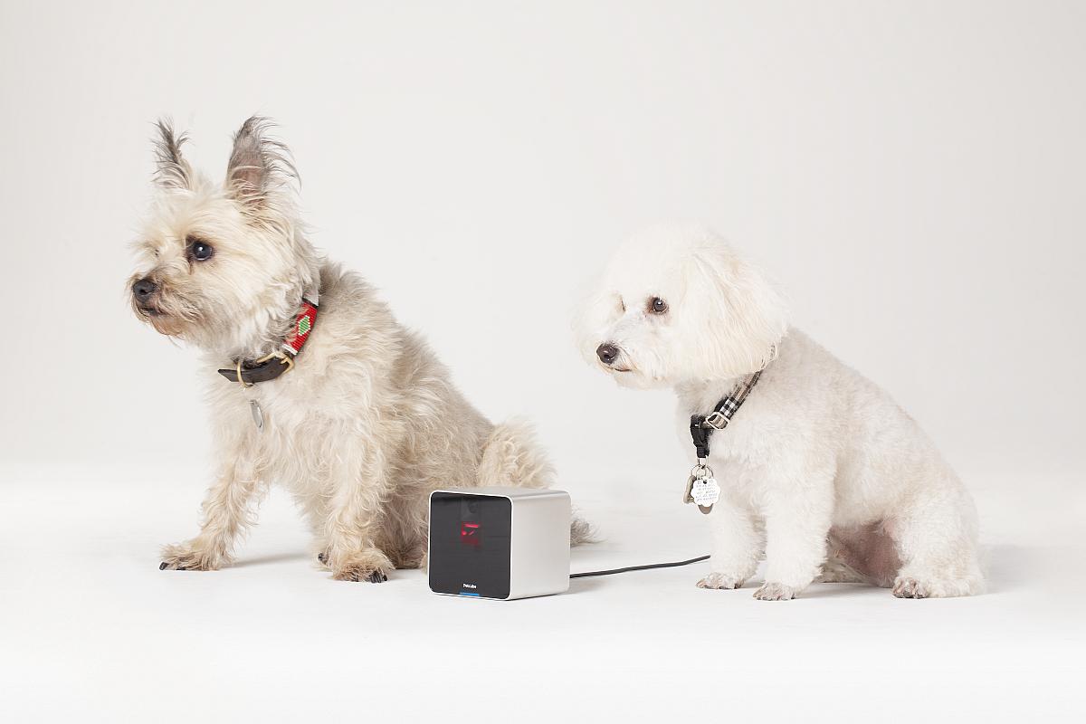 petcube kamera das babyphone f r katzen und hunde f rderland. Black Bedroom Furniture Sets. Home Design Ideas