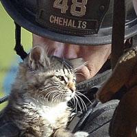 Diese Katze ist Content: Rumlungernde Niedlichkeit im Vogelbad (Bild Keystone/Independence Daily Reporter/Rob Morgan)